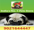 DOG PUPPIES & ALL BREEDS; THE PETS PARK ;9021644447