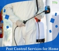 Quality Pest control service in Bangalore with TechSquadTeam