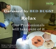 Get Flat 20% Off on Bed Bug Pest Control Services Bangalore