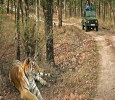 Adventure and Wildlife Tours
