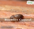 Booklice pest control solutions in Marathahalli