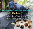 Avail Flat 20% Off on Pest Control Service in Bangalore at T