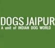 Know about authentic dog shop in Jaipur