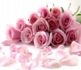 Online flower and cakes gift delivery in Delhi NCR