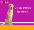 Pet Transport Services in India