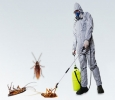 Pest Control in Kukatpally, Miyapur, Madhapur, Hitech City