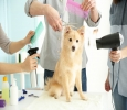 Dog Grooming in Chennai - Best Dog Groomer At DoorStep in Ch