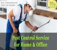 Pest Control Service in Bangalore By TechSquadTeam