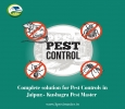 Best Pest Control Services in Udaipur