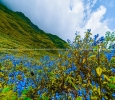 Valley of flowers Uttarakhand Package 2020