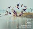 Looking for Affordable Chilka Lake Tour Package
