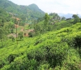 25 cents Residential Plot For Sale in Kethouri, Ooty